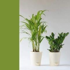 diy home decor crafts - Ugaoo Air Purifier Indoor Plants